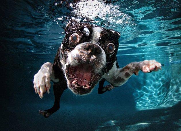 chien tete sous l eau 1